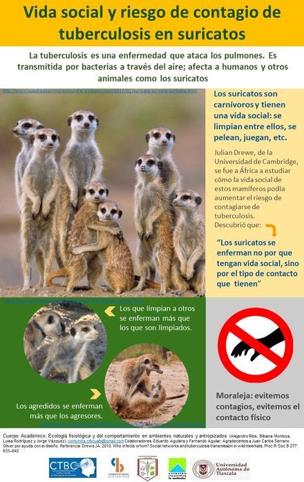 Esta imagen tiene un atributo ALT vacío; su nombre de archivo es Tuberculosis-en-suricatos6.jpg
