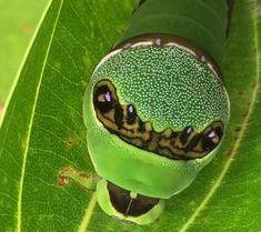 Esta imagen tiene un atributo ALT vacío; su nombre de archivo es biodiversidad.jpg