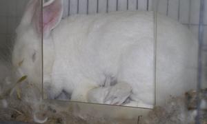 Esta imagen tiene un atributo ALT vacío; su nombre de archivo es conejos.png